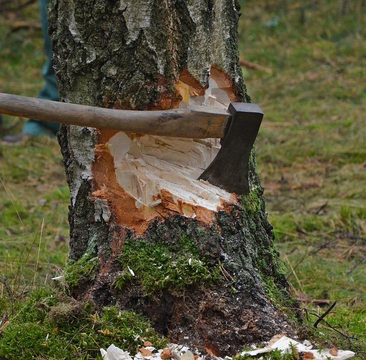 Kiből lehet erdőgazdálkodó?