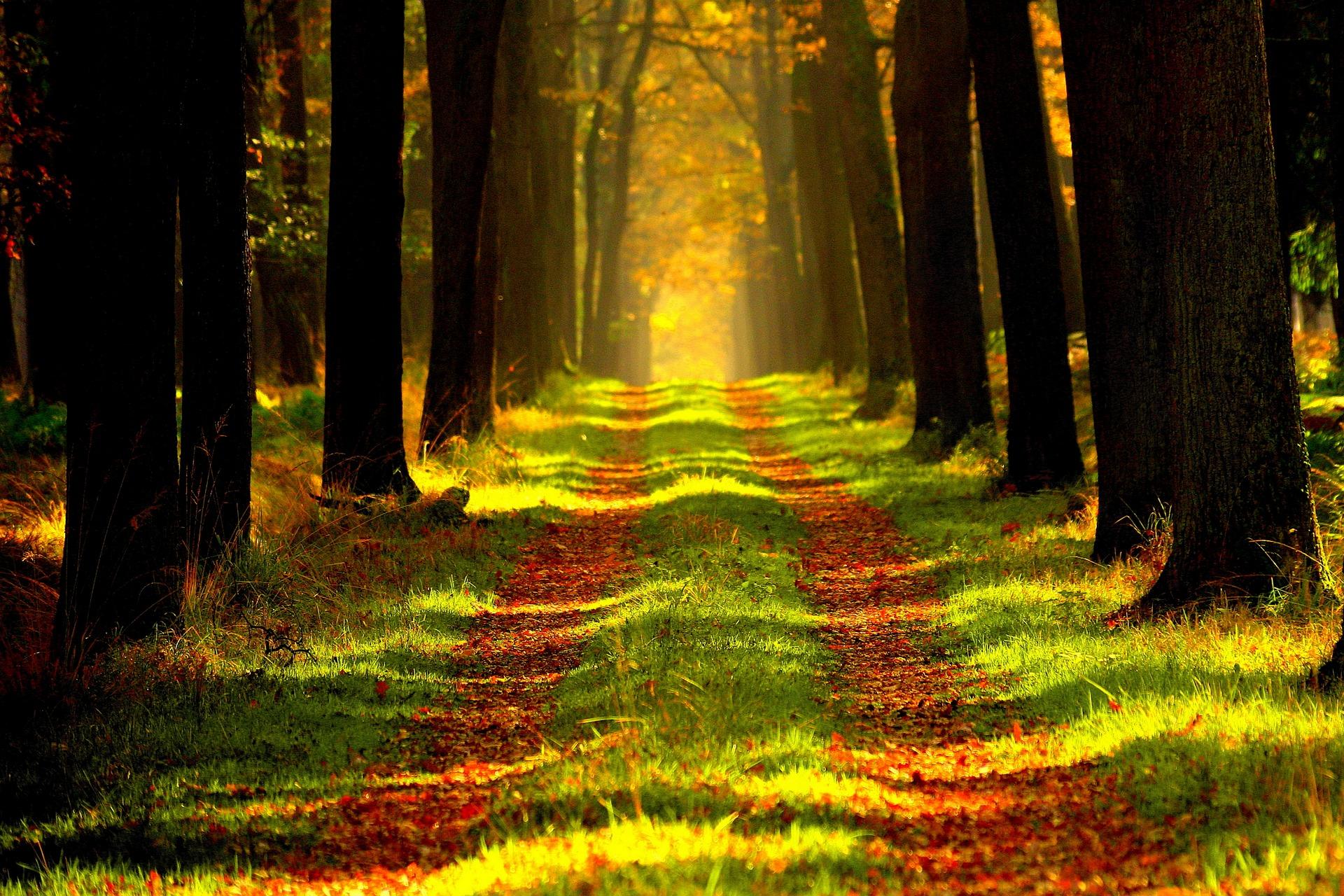 Milyen hátrányai vannak az osztatlan közös tulajdonban lévő erdőknek?